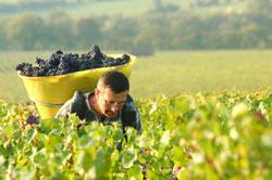 """法國葡萄酒""""祖庭""""勃艮地"""