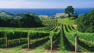南非葡萄酒历史
