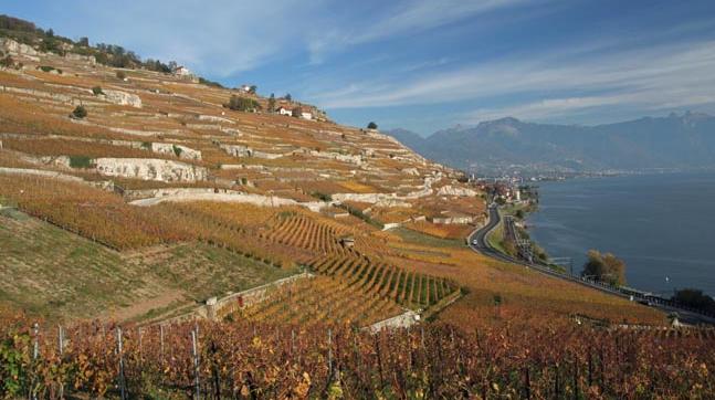 瑞士-陡坡上的葡萄园