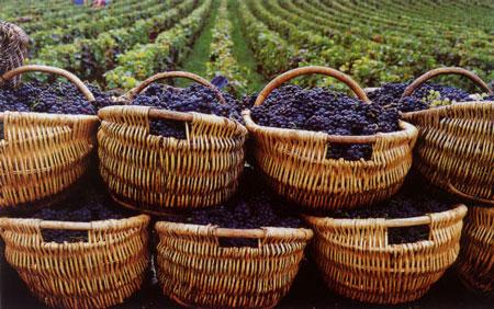 法国葡萄酒的品质管制