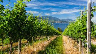 美国葡萄酒的命名原则