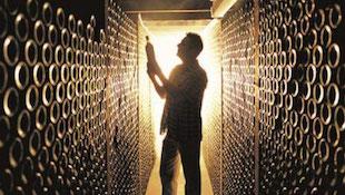 传统葡萄酒产区VS 新世界葡萄酒