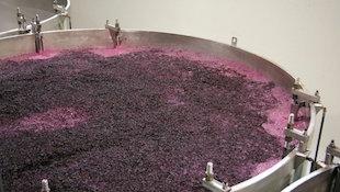 葡萄酒酿造技术之红葡萄酒发酵