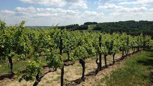 波尔多Bordeaux 2010:波尔多区 卡斯蒂永与弗朗