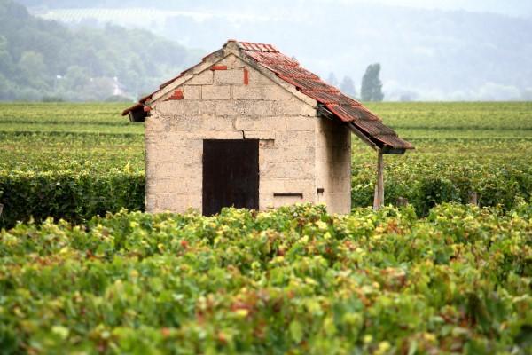 勃艮第葡萄園的歷史