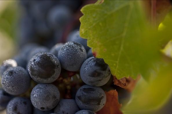 波尔多Bordeaux 2010:现代经典