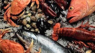 鱼肉虾蟹和法国葡萄酒搭配