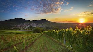 """""""新世界""""的绿色新贵-新西兰葡萄酒"""