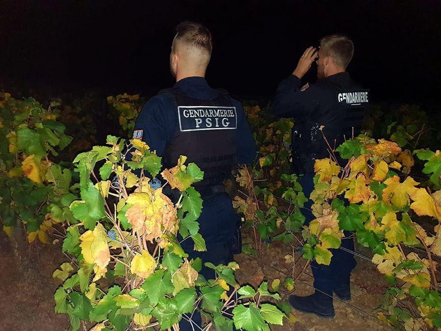 又到了偷盗葡萄的时节,勃艮第连警察都出动了