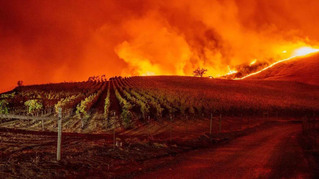 加州索诺玛突发重大野火,一夜烧焦16000多英亩