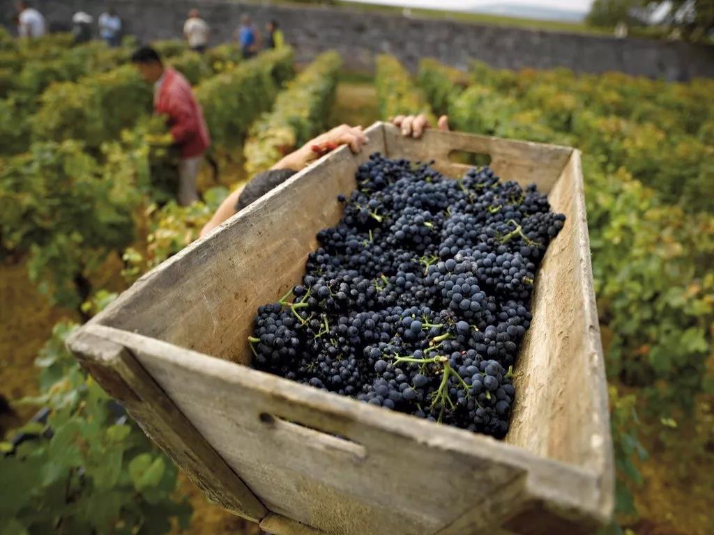 得益于国际需求的持续上升且今年产量有所增长,截至2019年9月,勃艮第葡萄酒的出口额首次突破10亿欧元大关。