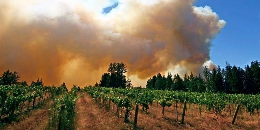 澳大利亚葡萄酒管理局:目前只有1%葡萄园受火灾影响