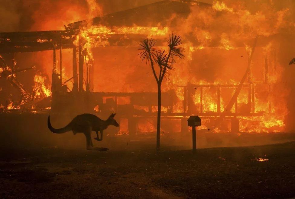 5亿野生动物丧生澳洲大火,60余家酒庄受灾,澳洲酒预计涨价