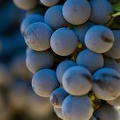 葡萄酒酿造-高级测试