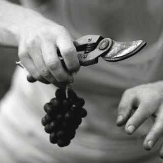 贾科萨酒庄 Fratelli Giacosa
