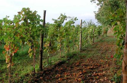 加拉迪酒庄 Galardi Terra Di Lavoro