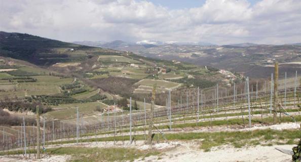 圣安东尼酒庄Castell Sant Antoni