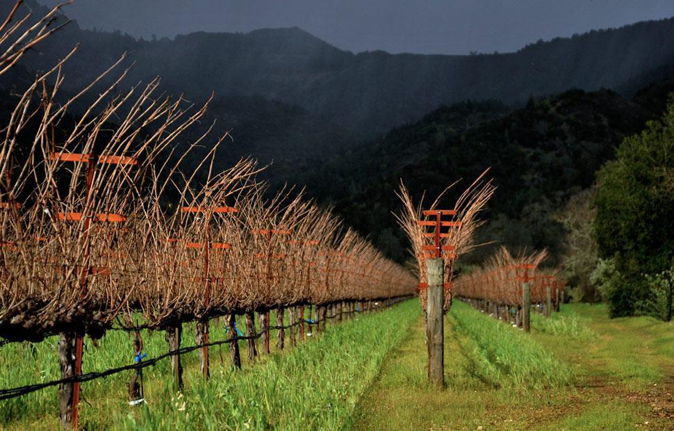阿罗珠酒庄Araujo Estate Wines