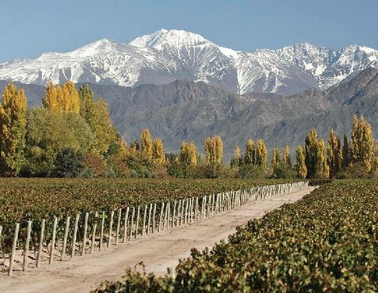 安第斯台阶酒庄Terrazas de los Andes
