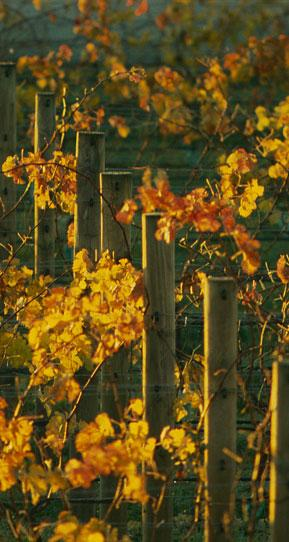 红铜酒庄Redmetal Vineyards