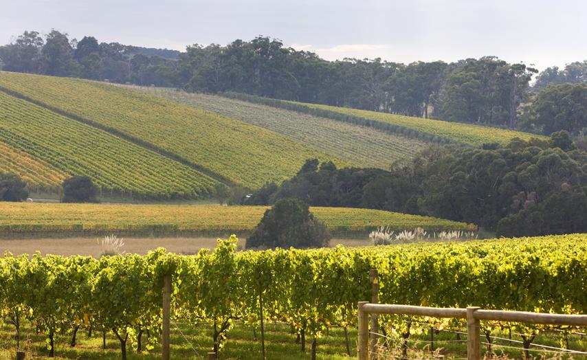 蒙塔托酒庄Montalto Vineyards