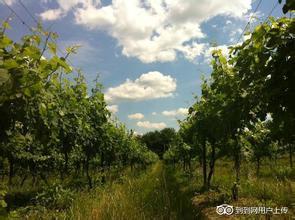 诺恩酒庄Noon Winery