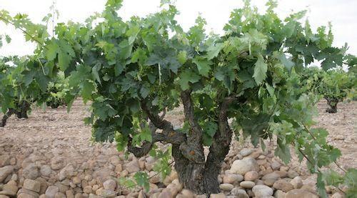 欧佛尼酒庄Bodegas y Vinedos O. Fournier