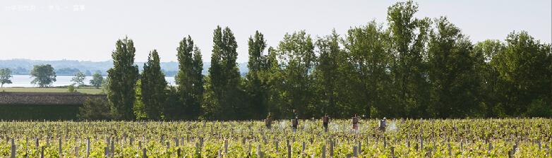 2012年拉图酒庄天气与收成情况