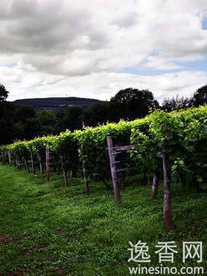 知名酿酒商Michel Chapoutier寻找英国葡萄种植地