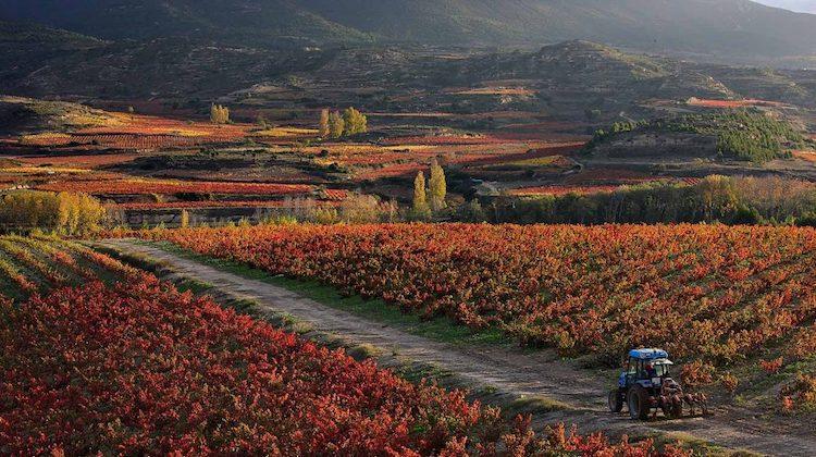 【上海】07/20 不可错过的Rioja名庄 La Rioja Alta橡树河畔品鉴