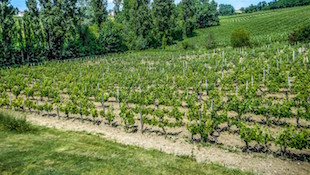 波尔多Bordeaux 2010:弗龙萨克和卡农-弗龙萨克