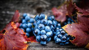 葡萄酒为什么是碱性食品